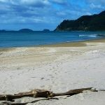pauanui-beach-in-spring